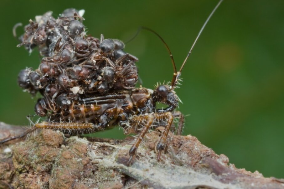 That's a rather gnarly backpack, assassin bug. Up Close With Nature/Getty Images