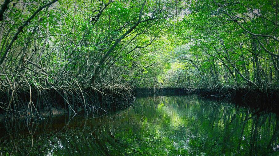Everglades National Park, pond