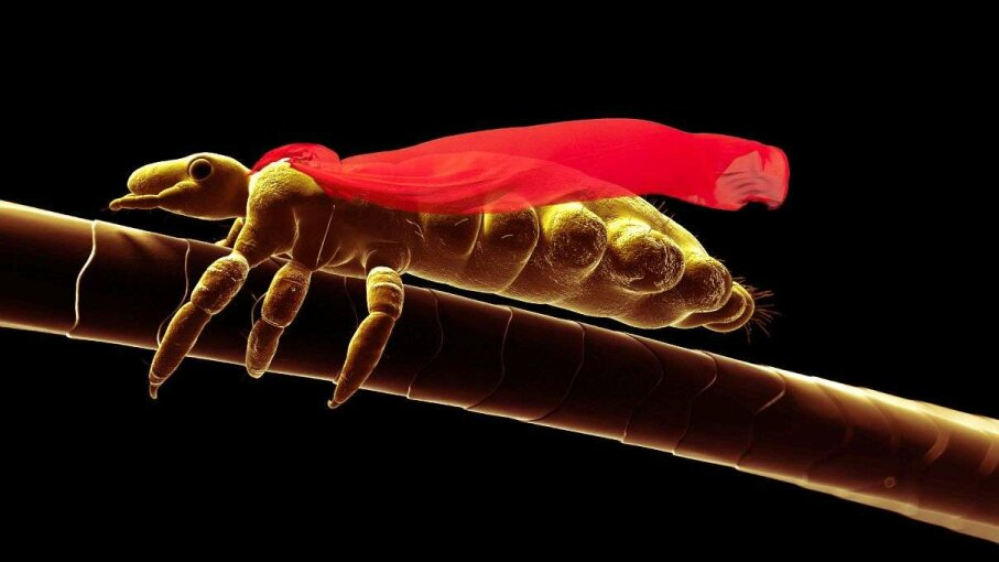 They may not have a little red cape but super lice are pretty powerful. SCIEPRO/Getty/Howstuffworks