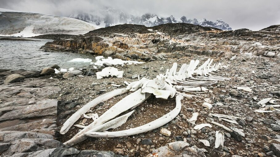 A whale skeleton located at Jugla Point, Antarctica, has become a popular site for amateur photographers and tourists. Patrick Endres/Designpics/Getty Images
