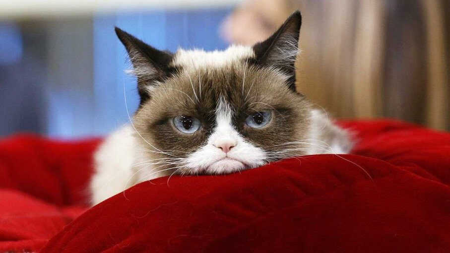 Get your fill of Grumpy Cat if you must, but seek out online information and news, too. Peter Kramer/NBC/Getty Images