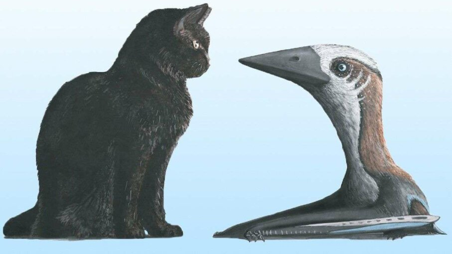 An artist's illustration depicts the relative sizes of a modern housecat and a pterosaur from the group Azhdarchoidea. Dr. Mark Witton