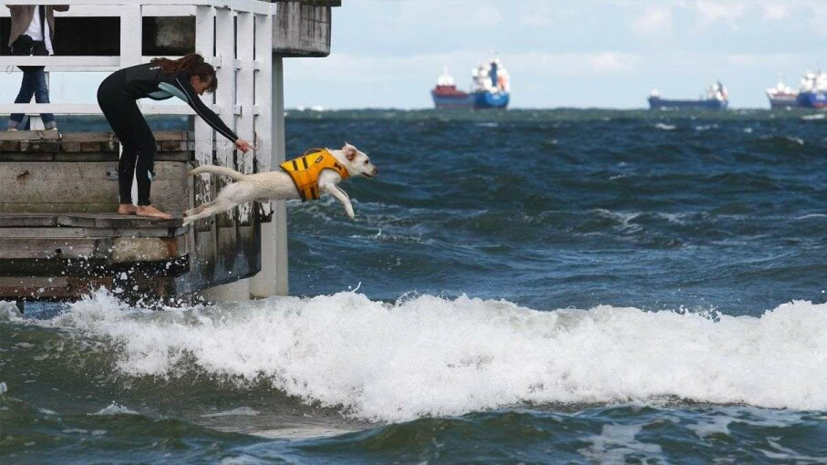 Action shot from the 2nd Water Rescue Dogs Cup of Poland, which occurred in Gdansk on June 11, 2016. Michal Fludra/NurPhoto via Getty Image