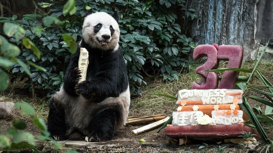 Oldest panda in captivity dies Reuters