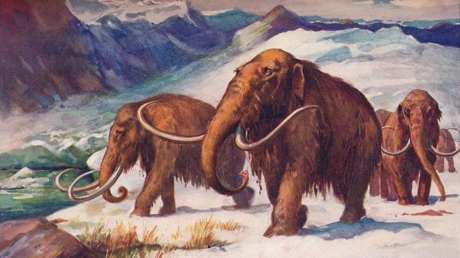 One of the world's last mammoth populations lived on what's now Alaska's St. Paul Island. Print Collector/Getty Images