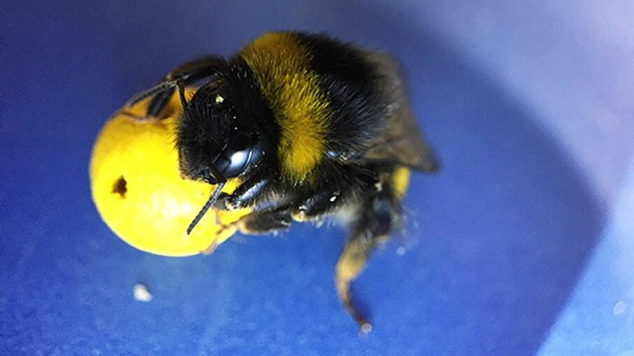 Observing how bees use a tool to gain a reward reveals surprising information about how they learn. Iida Loukola
