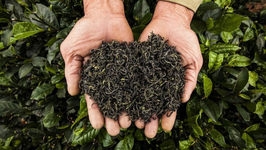 Can green tea cause hallucinations? That was a popular belief in times past. Aaron Joel Santos/Getty Images