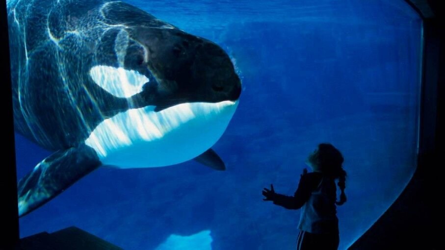 A girl peers at a killer whale on display in SeaWorld's San Diego Park in 2006. The park announced in March that it will no longer breed the animals. Wolfgang Kaehler/LightRocket via Getty Images