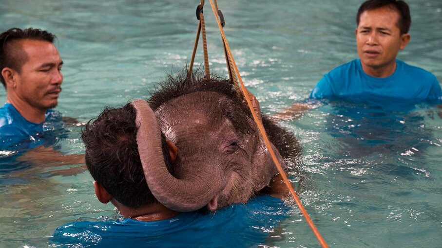Clear Sky, a 6-month-old baby elephant rests her head on the shoulder of one of her guardians during a short break in a hydrotherapy session. Roberto Schmidt/AFP/Getty Images