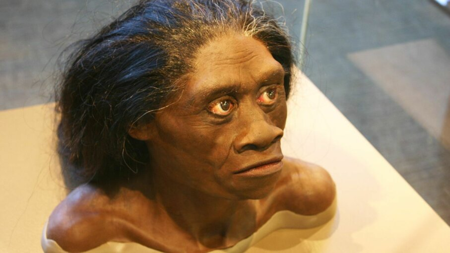 A bust in the David H. Koch Hall of Human Origins at the Smithsonian Natural History Museum recreates what a living Homo floresiensis may have looked like. Ryan Somma/Flickr