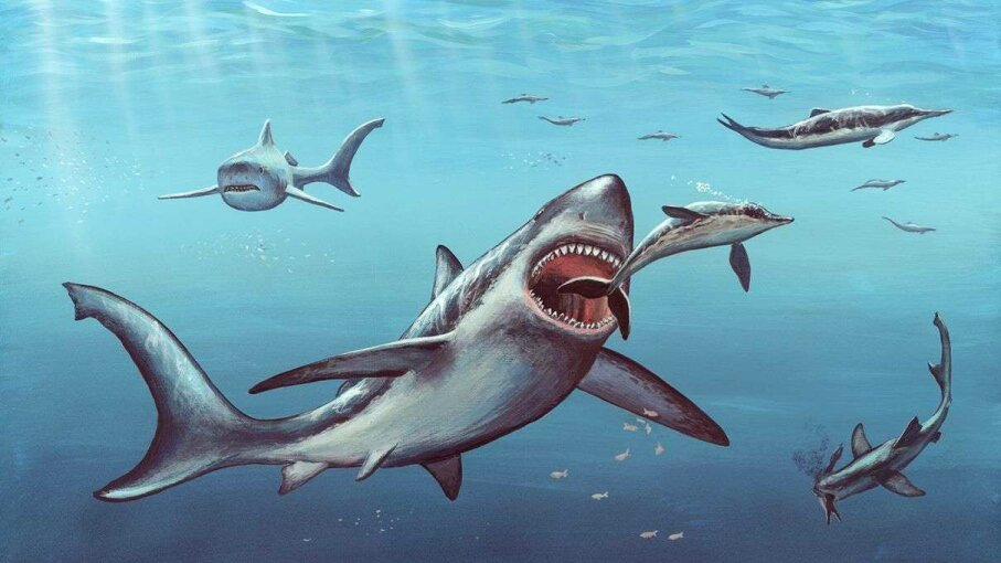 Giant shark megalodon was the apex predator in Earth's oceans for millions of years, before going extinct about 2.6 million years ago. Richard Bizley/Science Photo Library/Getty Images