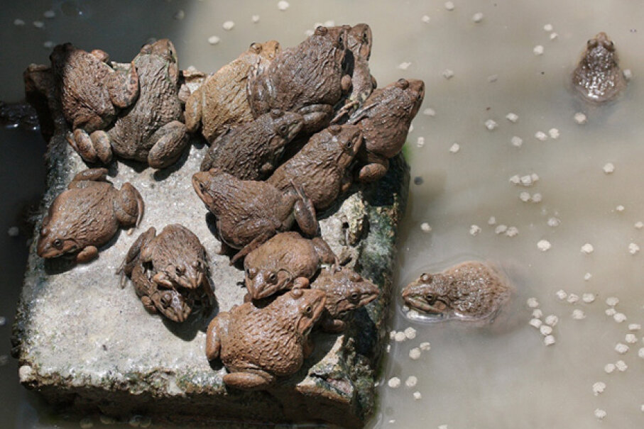 Thousands of frogs landing on a town would scare anyone. Ronald Leunis / EyeEm/Getty Images