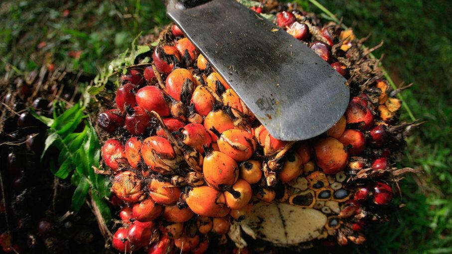 palm oil, deforestation