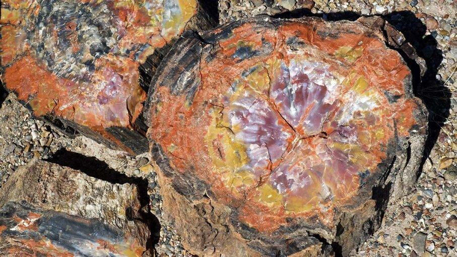 petrified, wood