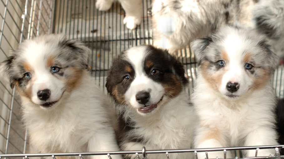New California Law Requires Pet Stores Sell Only Rescue Animals