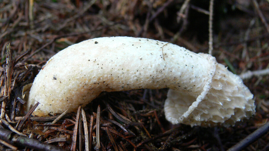 Weird Shaped Mushrooms 5