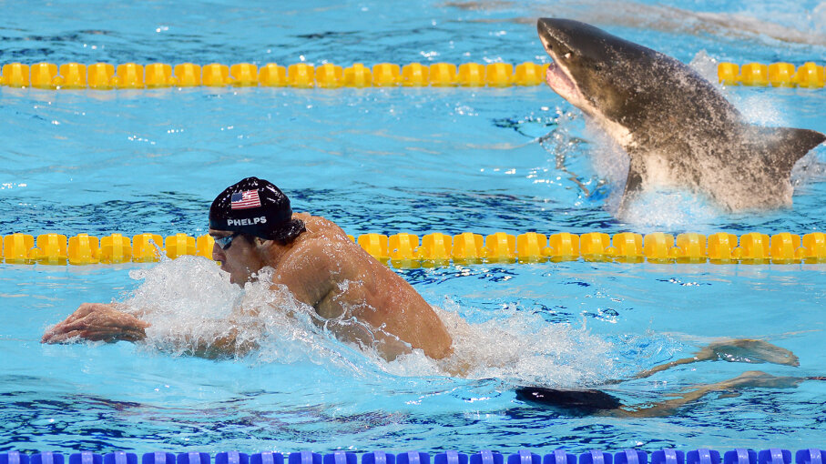 No, the race between Olympic swimmer Michael Phelps and a great white shark won't go down like this. Though it sure would be entertaining.  David Jenkins/MCT/Getty Images