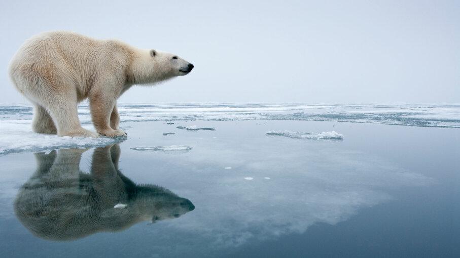 polar bear standing on sea ice