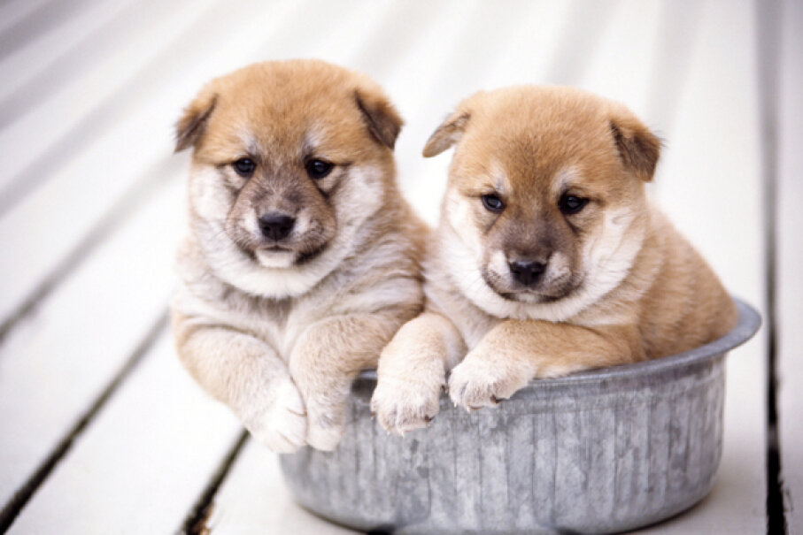 To be a responsible shopper, buying from a reputable pet dealer is essential. Not all online sources are what they claim to be, and that's especially true in the world of pets. GYRO PHOTOGRAPHY/amanaimagesRF/Getty Images