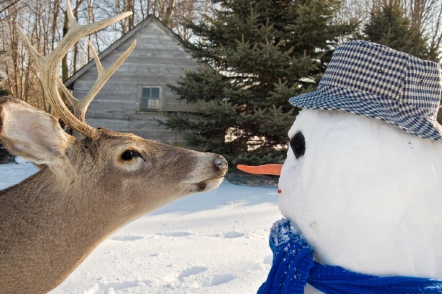 Note: You may not be able to control for the deer variable in your snowman experiment. Maria Dryfhout/iStock/Thinkstock