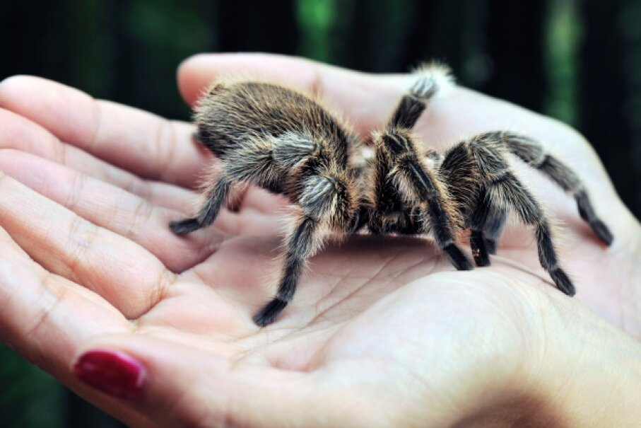 Yes, spiders inhabit most areas of the world — but one isn't always just a few feet away. Lijuan Guo/Thinkstock