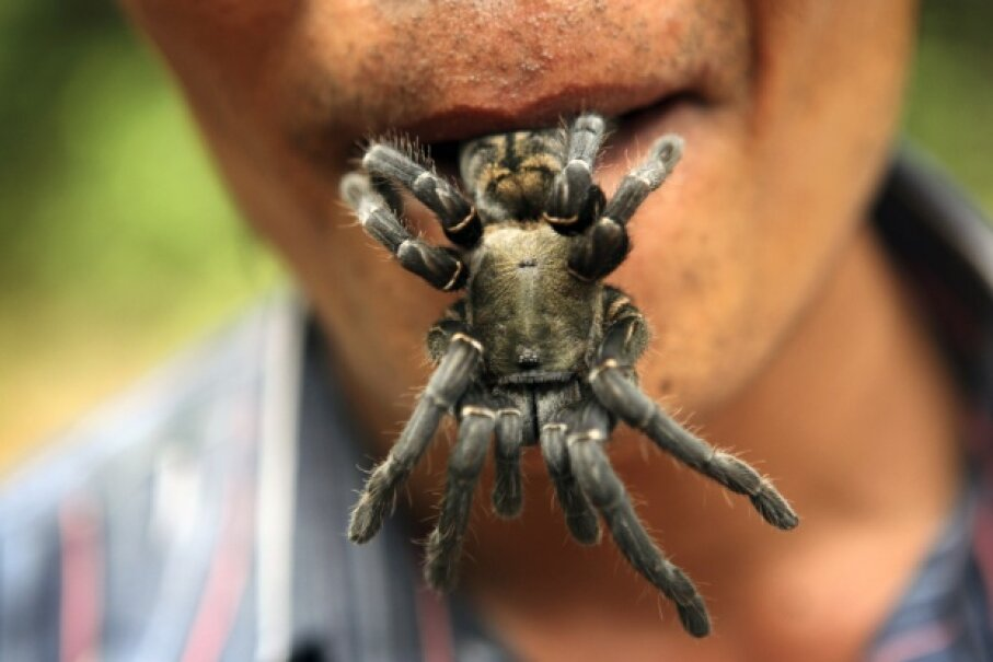 Just because people eat fried spiders in Cambodia doesn't mean you want them sneaking into your mouth while you slumber. Tim Whitby/Getty Images