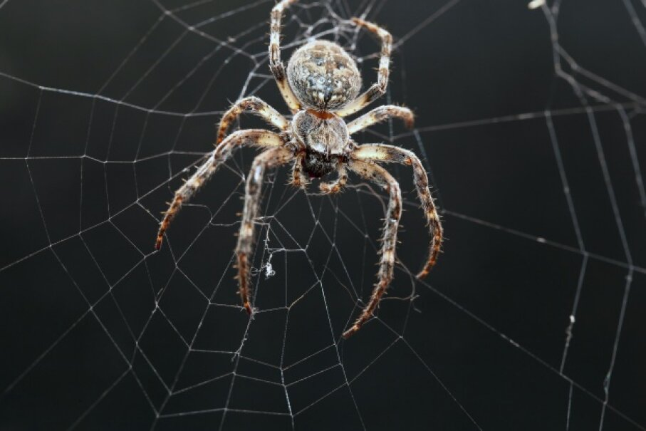Orb webs may be the best known type, but spiders are a lot more creative than we give them credit for. feedough/Thinkstock