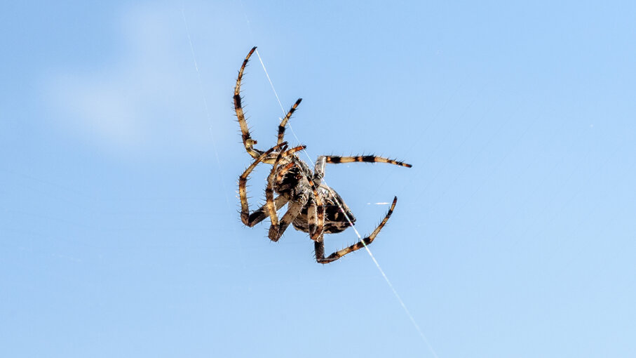 Spider silk has special properties that help spiders stay steady when they descend on their threads. _jure/iStock/Thinkstock