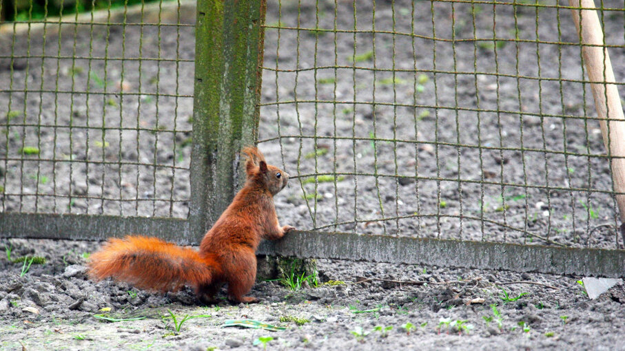 It S Gardening Season 5 Tips To Keep Squirrels Out Howstuffworks