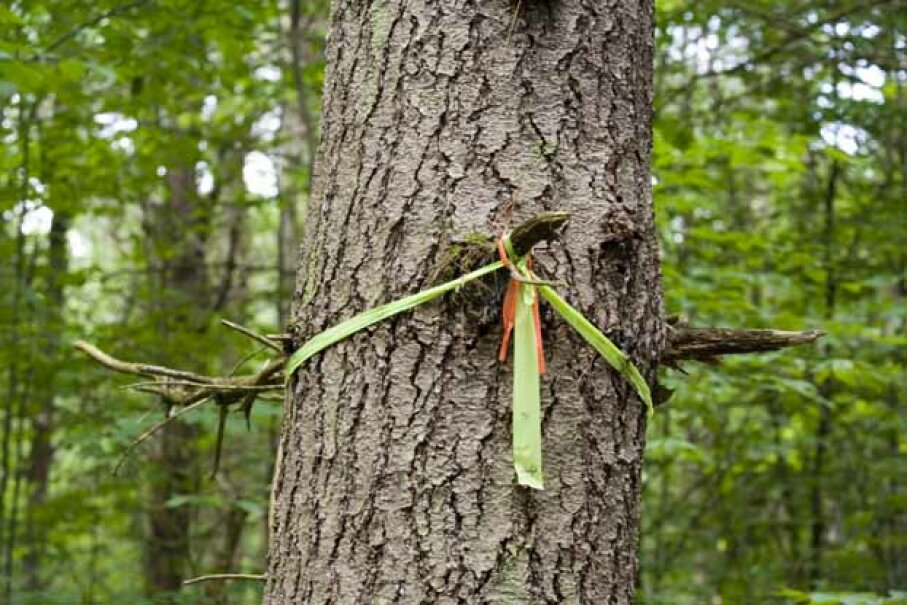 The worst thing is to get lost in the woods. In lieu of a trail marker, use some string from your bracelet. iStockPhoto/Thinkstock