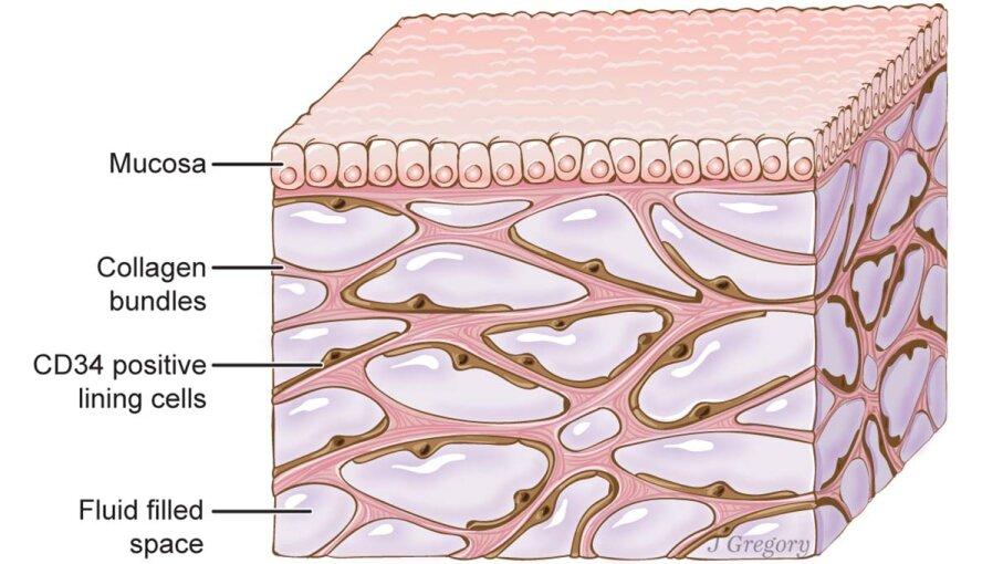 tissue, organ