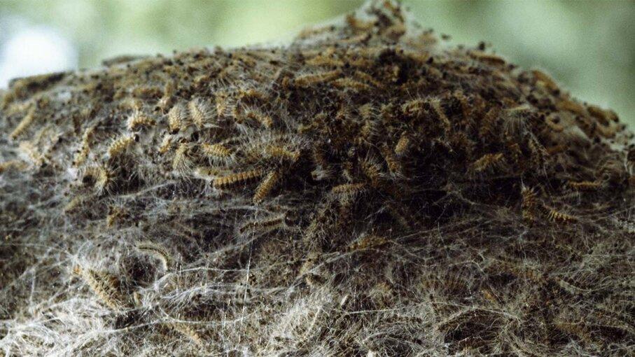 toxic, caterpillar