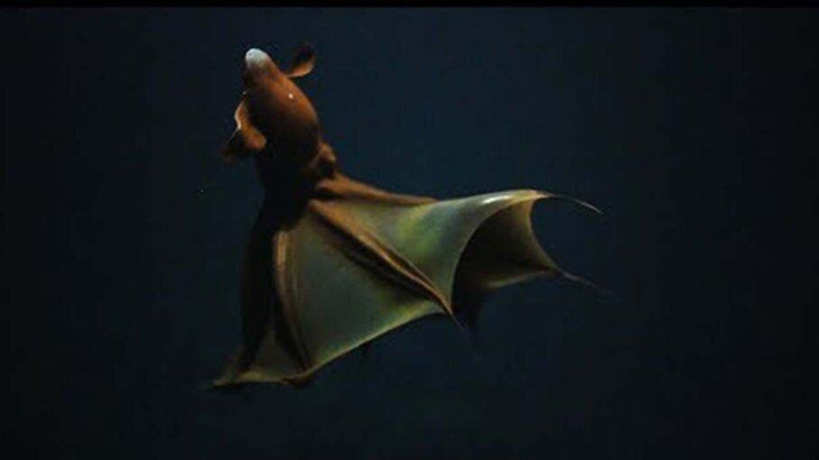 squid, vampire