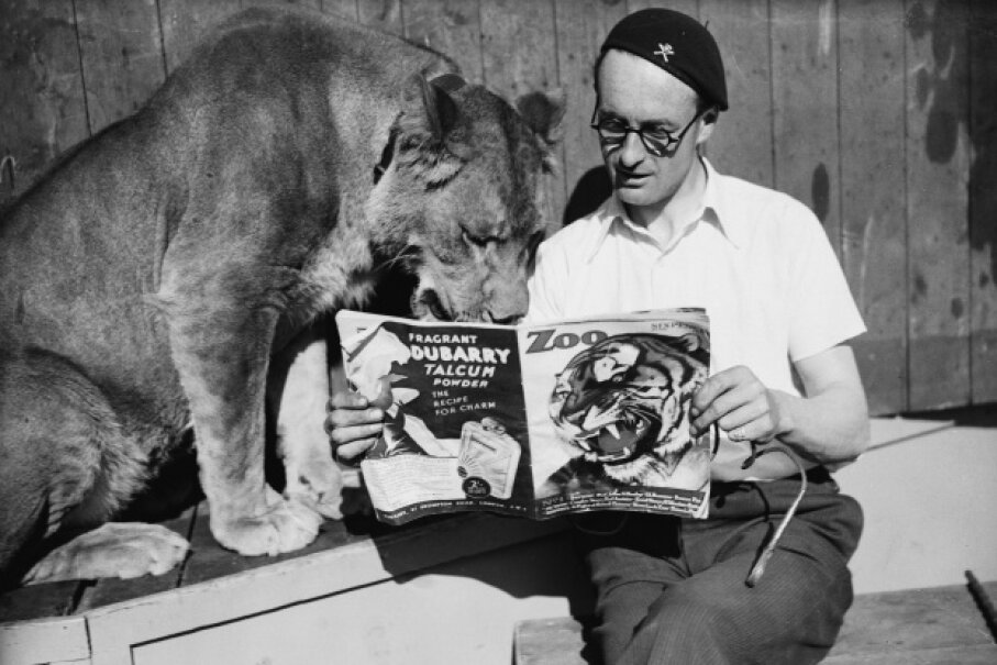 A wall of death rider reads Zoo magazine with a lioness. Think that's strange? This list gets even weirder. Fox Photos/Hulton Archive/Getty Images