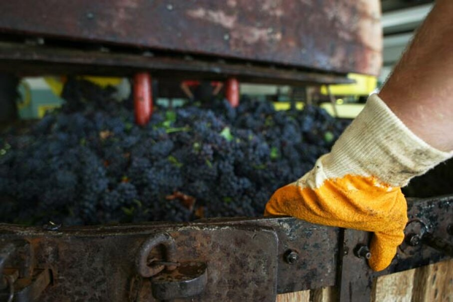 The waste from pressed grapes can actually be converted into biofuel. Ingram Publishing/Getty Images
