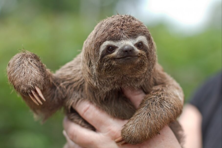 4: Sloth Stomach - 10 Worst Adaptations in the Animal