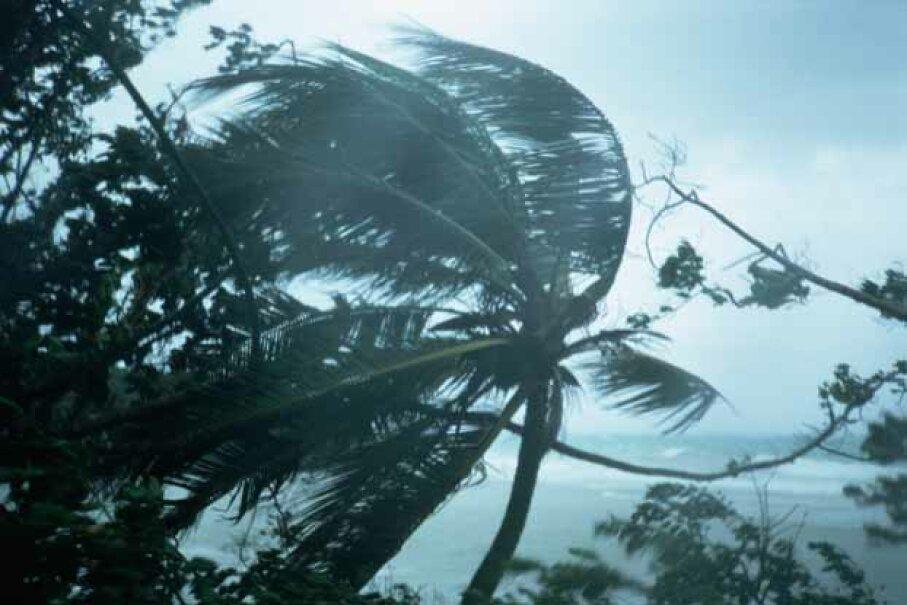 hurricane gilbert, trees