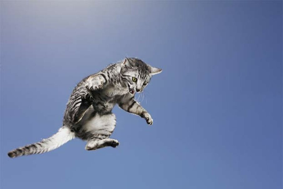 Cats don't always land on their feet, so don't let your kids toss them to prove a point. Mike Powell/Getty Images